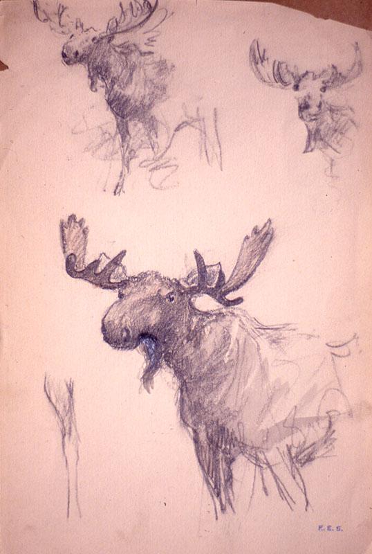 (0294s) Moose – Sketch