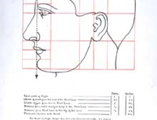 (sw097) Anatomical Drawing – Head in Profile